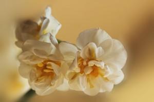 W_Narcis_0006