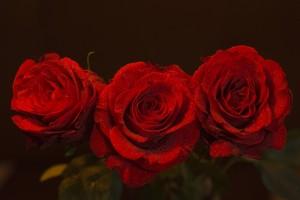 W_4.Roser