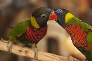 W_BIRDS_0217