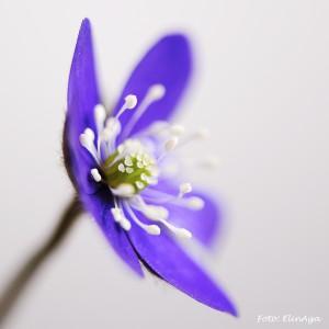 W_Blue_one_5665-2