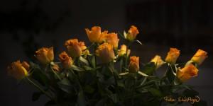 W_Orange_roser_sign_1734